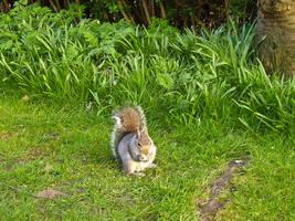 peanut-eater by piorun