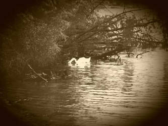 Swan Lake by thomasbaron06