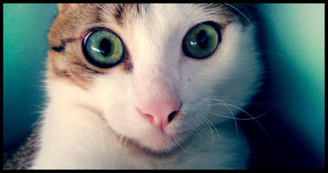 cat01 by ptitehooligan