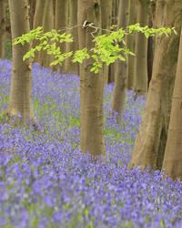 Priors Wood by Alex37