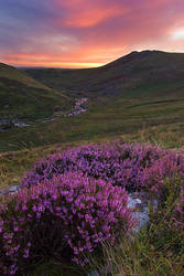 Cleave Heather 2 by Alex37