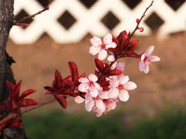 Plum Blossoms 6 by XxSilverOwl13xX