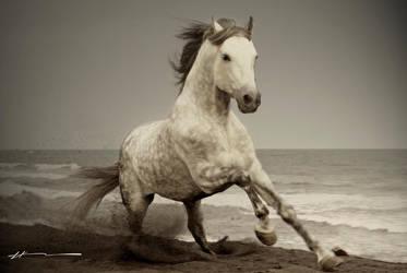 wild horse by hEERB