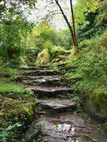 Stock : Wet woodland steps by Ange1ica-Stock