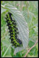 Good-looking caterpillar by Pildik
