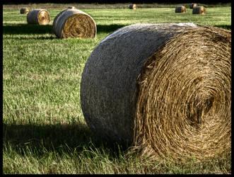 Hay rolls by Pildik