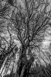 Natures Hand by whitephotographySCOT