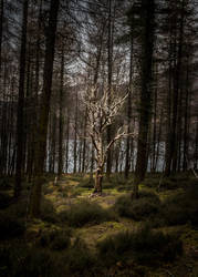 Tree by whitephotographySCOT