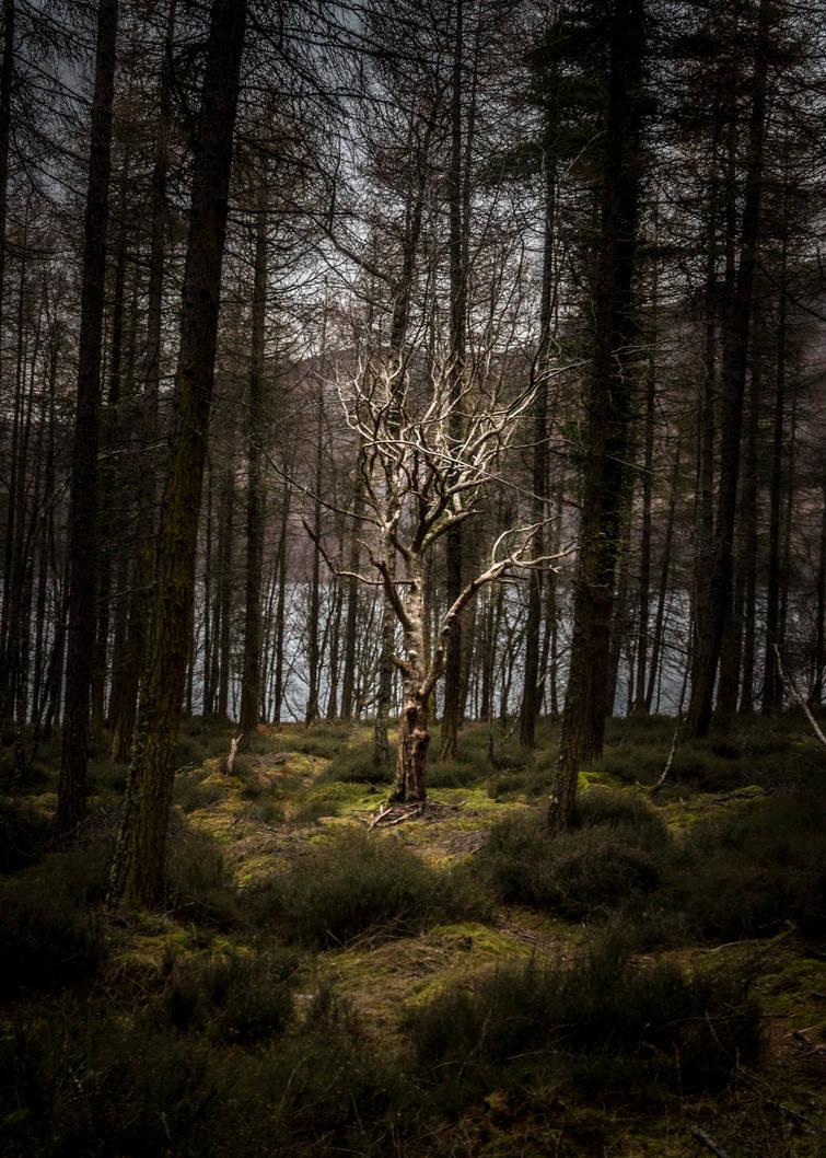 Tree by whitephotographySCOT