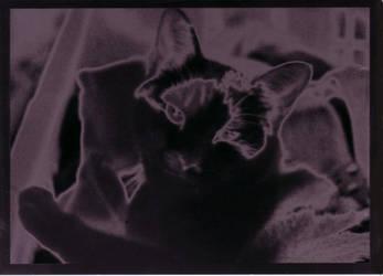 Hobbes by Tinselcat