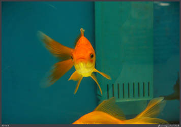 Fish Stock 0050 by phantompanther-stock