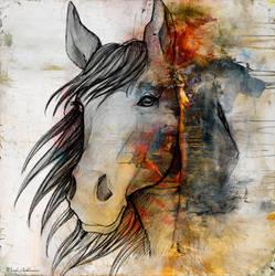 horse by markashkenazi