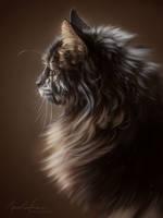 Cat Study by ImaginaryRat