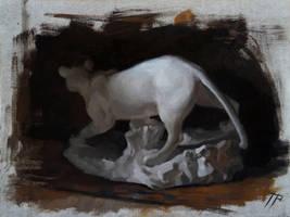 White Jaguar by TomasProchazka