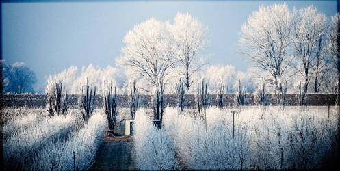 coldness by giaretart