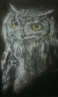 Hoo's That by SiriuslyArt