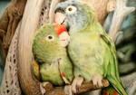 Parrot Pals by SiriuslyArt