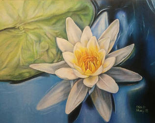 Waterlily by SiriuslyArt