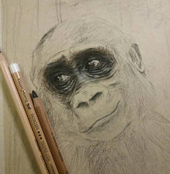 Gorila wip #1 by SiriuslyArt