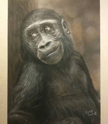 Eyes of an ape (pastel drawing) by SiriuslyArt