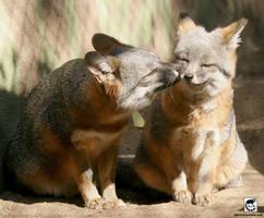 Kiss the fox! by jaffa-tamarin