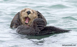 Happiness is a wet otter by jaffa-tamarin
