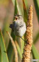 A bird in the bush by jaffa-tamarin