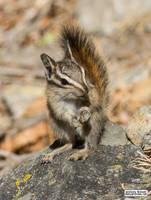 Hello chipmunk! by jaffa-tamarin