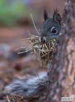 Shy squirrel by jaffa-tamarin