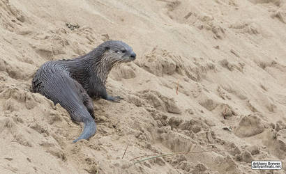 The otter's spot by jaffa-tamarin
