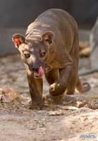Prowling fossa by jaffa-tamarin