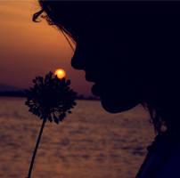 sunflower by marielliott
