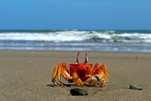 Oh Crab by MAdanai