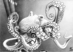 Octopus by AlienOffspring