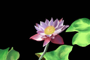 Water Lily by Shutsumon