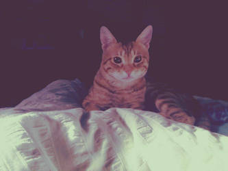 Meow :3 by shadowsofthepast2010
