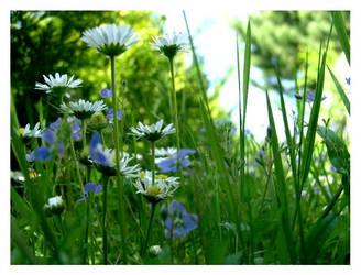 Grass by Seu4