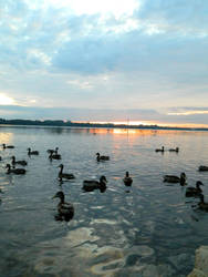 Ducks by KikyBee