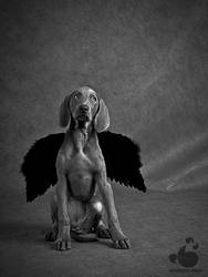 All Dogs Go To Heaven by armene