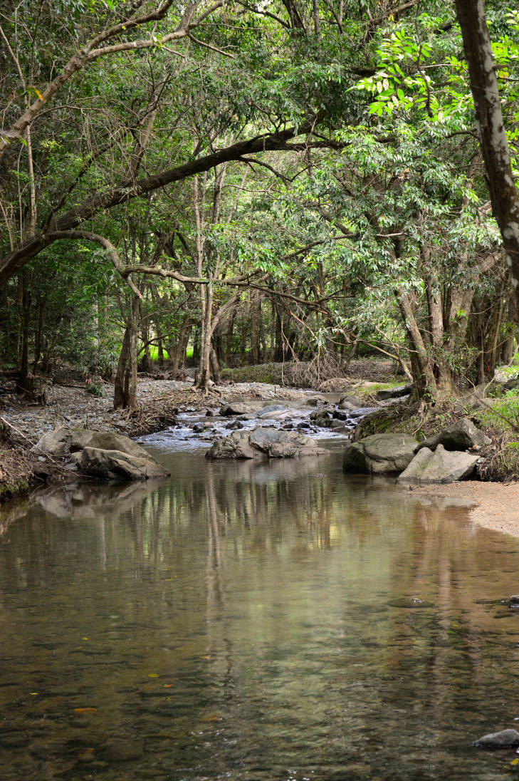 The Creek by Misty-Mornings