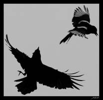 Crow And Magpie by irrealex