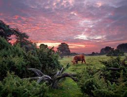 Red Cow Red Clouds by zeitspuren