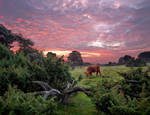 Red Cow Red Clouds by zeitspuren
