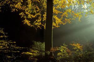 Forest light by zeitspuren