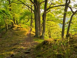 Path through a May forest by zeitspuren