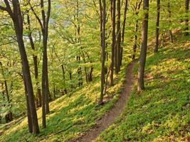 Hiking trail through oak forest by zeitspuren