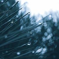 .: rainy day :. by biszkopciik