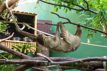Sloth by Fotostyle-Schindler