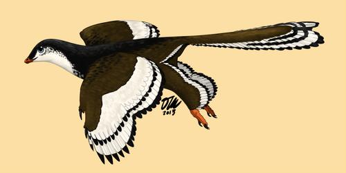 Archaeopteryx by StygimolochSpinifer