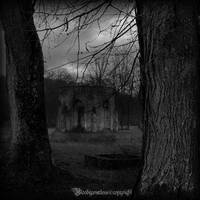 Between two trees by CountessBloody